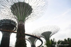 Super Trees, Gardens by the Bay, Singapore