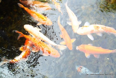 Fishes from Ocean Park, Hong Kong