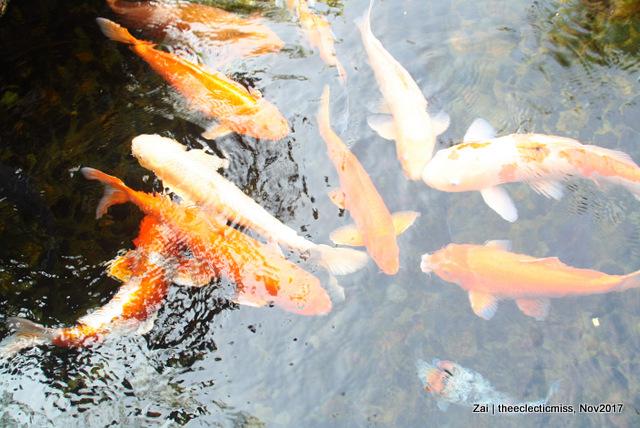 Fishes from Ocean Park, Hong Kong