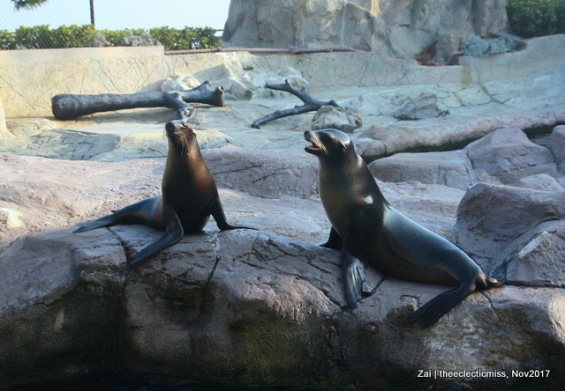 Sea Lions at Ocean Park, Hong Kong